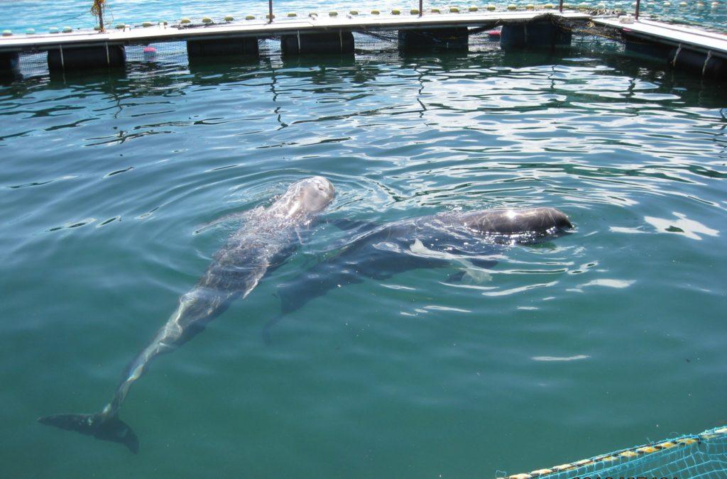 いけすの中のクジラ