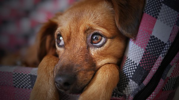 犬の甘えるような顔